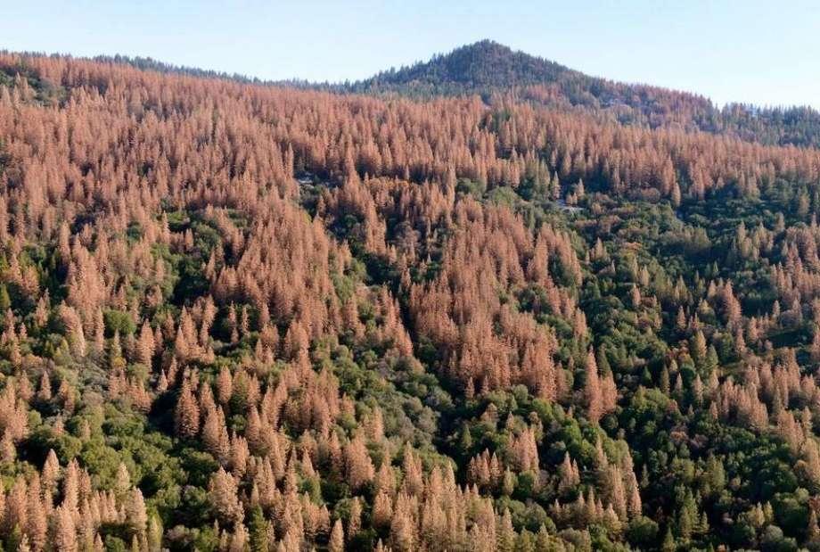 beetle kill forest.jpg